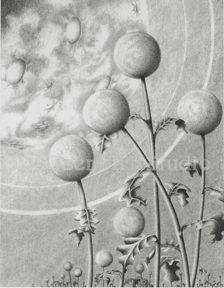 Graphite drawing, Moonflowers, by Marty Kiser